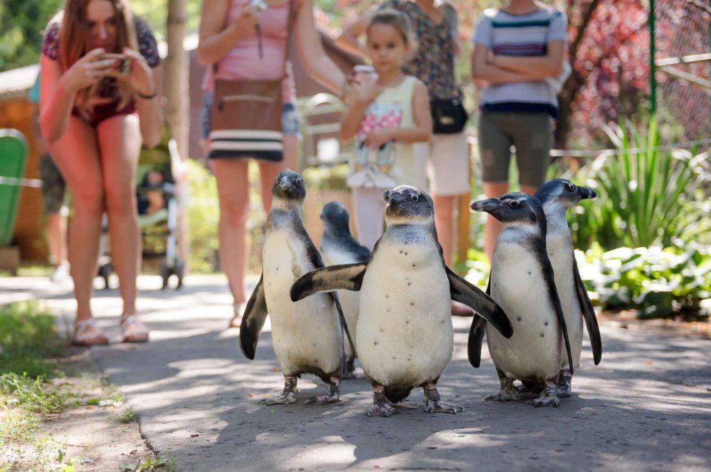 Nagyerdei Entertainment Complex (Debrecen Zoo & Theme Park)