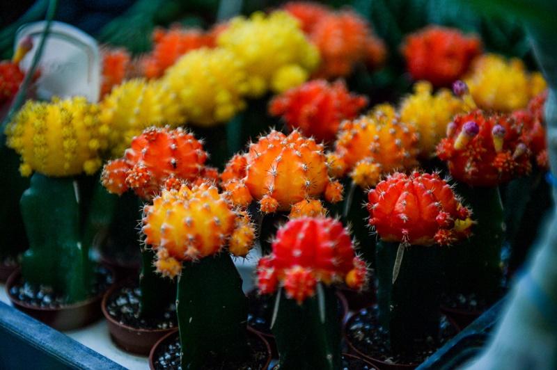 Cactus and Succulent Exhibition