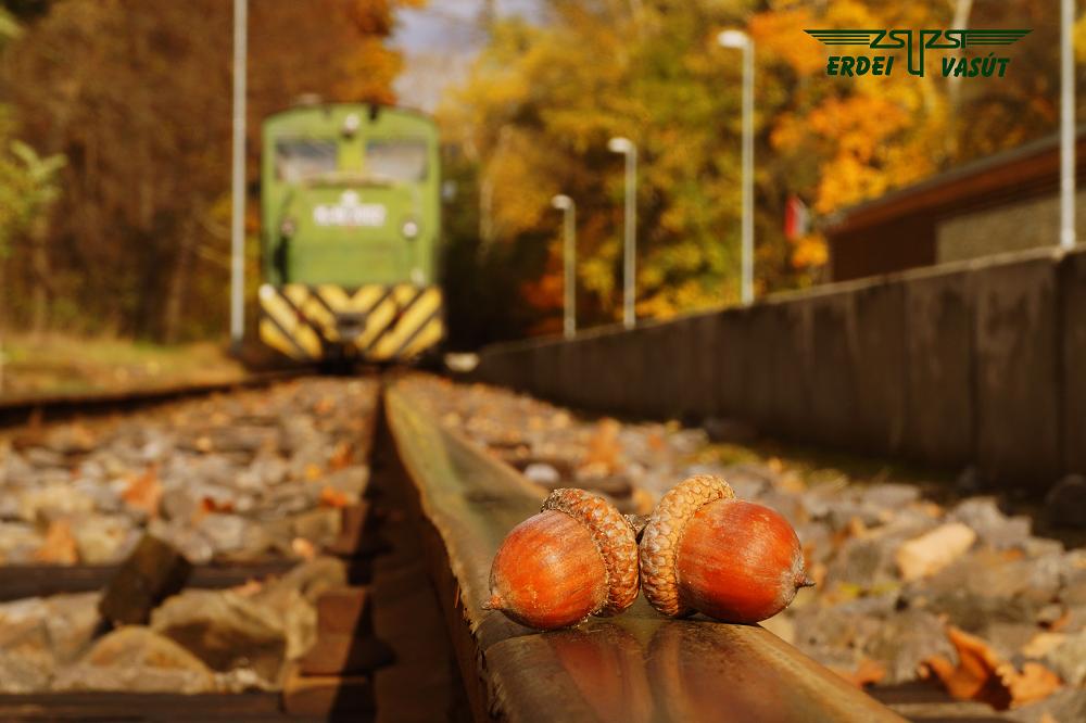 zsuzsi-forest-railway-os